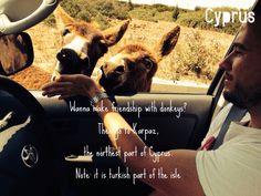 Donkey trip!
