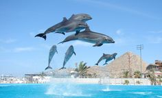 Fun & Educational Experiences at Cabo Dolphins. Chase Had a great time swimming with the Dolphins. Vacation Places, Dream Vacations, Vacation Spots, Las Vegas, Cabo San Lucas Mexico, Living In Mexico, Costa, San Jose Del Cabo, Fun Activities To Do