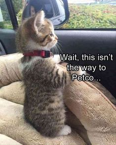 Funny Quote Cat Animal Photo Fridge Magnet 3 Collectibles - Funny Animal Quotes - - Funny Quote Cat Animal Photo Fridge Magnet 3 Collectibles The post Funny Quote Cat Animal Photo Fridge Magnet 3 Collectibles appeared first on Gag Dad. Cute Animal Memes, Funny Animal Quotes, Animal Jokes, Cat Quotes, Cute Funny Animals, Humor Quotes, Memes Humor, Funny Cat Memes, Dog Memes