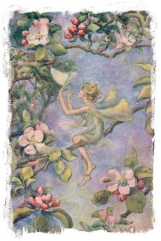 Apple blossom Fairy