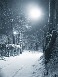 Neve notturna By Giorgio Raffaelli I Love Snow, I Love Winter, Winter Is Coming, Winter Snow, Especie Animal, Seasonal Image, Winter Magic, Winter's Tale, Snowy Day