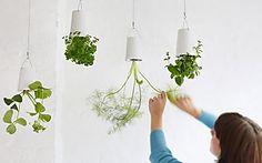 Vasos invertidos para pendurar plantas: veja como fazer