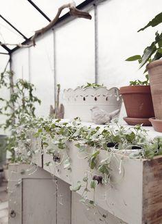 greenhouse   plants   vintage   interior   aspellhome.se
