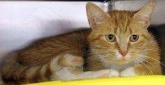 Ellen: Beautiful ginger with the saddest face out of time at high-kill shelter RESCUED BY KEILA ADAMS