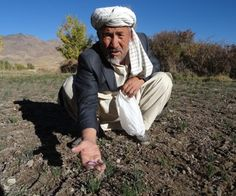 Helping Afghan Farmers, One Thread at a Time