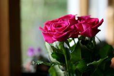 http://gorgeous-love.tumblr.com/post/4932593554