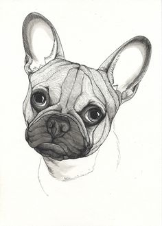 French Bulldog sketch. Sketchbook page by Jeroen Teunen, The Dog Painter. Frenchie