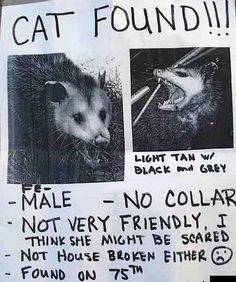 seriously? Y'all know this in an opossum right?