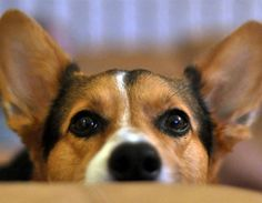 Healing Your Dog With Oxygen Therapy