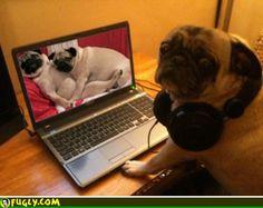 Its A Pugs Life