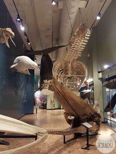 new brunswick museum greal hall of whales Saint John New Brunswick, New Brunswick Canada, Fredericton New Brunswick, East Coast Canada, East Coast Road Trip, Atlantic Canada, Canada 150, Travel Reviews, Prince Edward Island