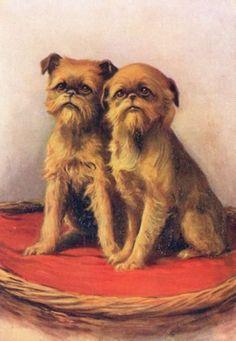 Vintage-Brussels-Griffon-Postcard-De-Reskze-No-8-c1910-2-Dogs