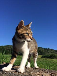 青空と猫  みやこ(@caran2miyako)さん | Twitter
