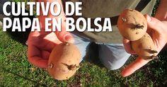 Cosas del Jardin: Parte 1 - Como Cultivar papa en el Balcón - Patata en Bolsa - Práctico y Facil!