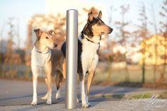 Auf dem Spaziergang gibt es Straßenlampen, Verkehrsschilder und andere Hindernisse. Lehre heute Deinem Hund, Dir darum zu folgen - für mehr Spaß!