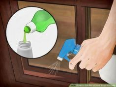 Image titled Get Rid of Stink Bugs Naturally Step 5