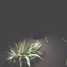 New Friend! #palm #superpalace #cozyhome #munich #plant #lamp #classic