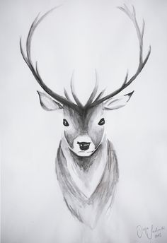Deer Drawing / Drawing Tutorial – Hirsch - New Sites Pencil Art Drawings, Art Drawings Sketches, Animal Drawings, Easy Drawings, Ballet Drawings, Pencil Drawing Tutorials, Deer Drawing, Watercolor Drawing, Drawing Drawing