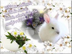 Výsledok vyhľadávania obrázkov pre dopyt blahoželanie k velkej noci Rabbit, Animals, Image, Bunny, Rabbits, Animales, Animaux, Bunnies, Animal
