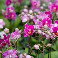 hortensie pflegen schneiden und vermehren garten pinterest garden and flowers. Black Bedroom Furniture Sets. Home Design Ideas