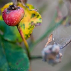 Closeup nature photography 4x4 bright by AulaniPhotography on Etsy, $6.50