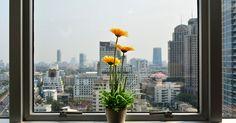 Pflanzen sind ein Stück Natur. Sie bringen nicht nur Farbe und Sauerstoff in unsere Wohnungen, sondern auch ein großes Stück Atmosphäre.