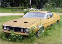 "1973 Ford Mustang Mach 1 - ""This Mach 1 is near Scottville, and it's been sitting in this same spot for the last 12 years. It hasn't been registered since 1988, but it was running and driving when parked. It sits in front of the owner's father's house, and of course it's not for sale. The car's in ok shape, but the interior has been destroyed by mice."""