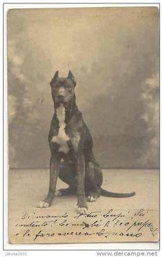 #36 DOG GREAT DANE HUNDE DOGGE OLD POSTCARD - Delcampe.net