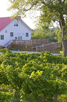 A place to go enjoy the outdoors and delicious wine w/friends!! and it is very close to Greenwood!