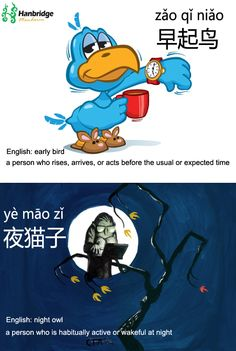 Are you early bird(早起鸟) or night owl(夜猫子) 呢