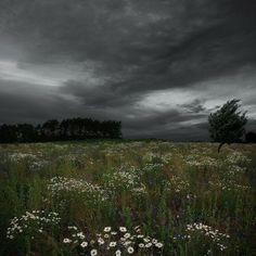 wonderful lanscape, dark cloud, green field, white flower