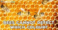 You probably thought that bees could see every colour that we can see, but you'd be wrong! Bees get to see in the ultraviolet world, something only we humans can only mimic using p