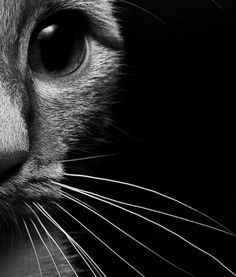 Haiku for a watchful cat: Whiskers to the fore/ Eyes round, body tense, tail that twitches/ Her prey, a shoestring. #cats