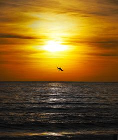 Beautiful sunset and pelican dive.