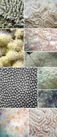 Corals. I really like the collage of the different types of Corals. It shows the wide range of colours it can be. It also shows the many shapes and patterns Coral can have. They have various textures.