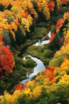 autumn fall colors trees with river stream