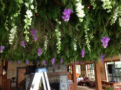 Hanging larkspur and scented stocks in the hanging forest garden.