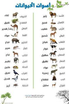 Learn Arabic Alphabet, Learn Arabic Online, Arabic Lessons, Islam Beliefs, Islam Religion, Beautiful Arabic Words, Islam Facts, Arabic Funny, English Language Learning