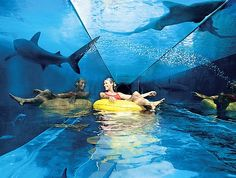 Take the plunge ... thrill-seekers can brave the shark tank on the Ziggurat ride.