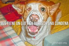 MIRA ESTE VÍDEO: http://www.youtube.com/watch?v=UUK4q2IqoVY=share=UUSlihPlrLoCcXL3zvOw4aZw Si quieres hacerte socio: http://www.elrefugio.org/AreaAdministracion/Formu.htm