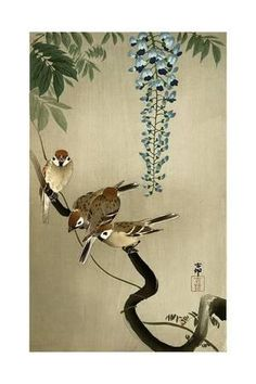 Sparrows and Wisteria Giclee Print by Koson Ohara at Art.com
