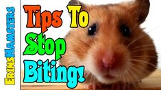 HOW TO STOP SMALL PETS BITING