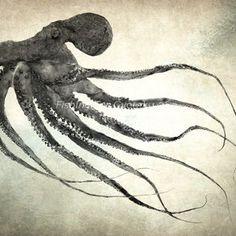 Gliding Octopus Gyotaku Print - Traditional Japanese Fish Art by Dwight Hwang