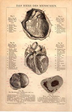 1884 Heart Anatomy Antique Print Medical Medicine by Craftissimo