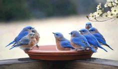 Tweeting?