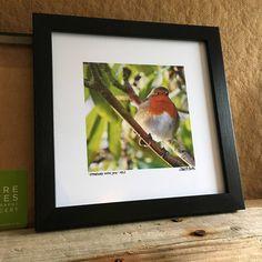 Robin - Robin Redbreast - Robin image - Robin picture - Remembrance -  Angels - British Garden Bird - Little Robin Redbreast - Original Gift by clarebatesphoto on Etsy