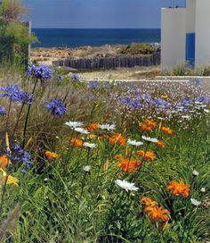 Plants, Blog, Gardens, Coastal Gardens, Grow Taller, Landscaping, Argentina, Blogging, Plant