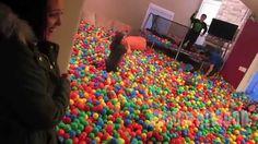 Roman Atwood Crazy Plastic Ball PRANK!! - #withdad Teaser