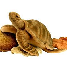 Sea Turtle 5072   http://www.ebay.ca/itm/HANSA-Plush-Sea-Tortoise-Turtle-5072-Portraits-Nature-Realistic-Stuffed-Animal-/171307933044?pt=Stuffed_Animals_US&hash=item27e2bf9d74