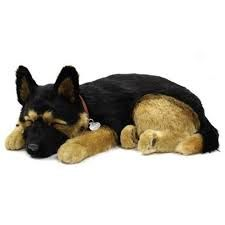 Adorable and oh so loveable German Shepherd Perfect Petzzz! This gorgeous 6 month old soft body puppy is the perfect companion for your little one! Your German Shepherd breathes like a real puppy and comes complete with an adoption certificate. A cute puppy sleeping in its soft bed. It requires no maintenance, feeding or cleaning. It is an ideal gift for all ages. Perfect Petzzz are the authentic sleeping puppies and kittens. They are so cute and lifelike – you can even see them breathe! Yo